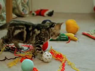 BBC: Эти Загадочные Кошки
